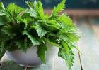 žihľava, pŕhľava, účinky, pomoc, úľava, pŕhlenie, popŕhlenie, zdravie, wellness, zdravie, liečivá bylina, liečivé byliny, smoothie, žihľavový