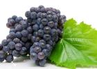 Tento silný antioxidant ako odpustenie za stravovacie hriechy?