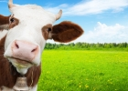 Aký má názor na mlieko TRADIČNÁ ČÍNSKA MEDICÍNA?