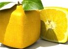 Čo sú to GMO (geneticky modifikované organizmy) a ako sa produkujú?