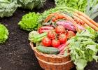 Ako jesť lokálne potraviny?