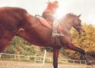 Chcete začať jazdiť na koni? Predtým, ako sa rozhodnete, mali by ste vedieť...