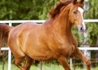 Ako sa starať o koňa? Takto by ste ho mali správne čistiť