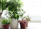 Rastliny podľa feng shui: sľubujú prosperitu a peniaze.