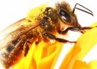 Pozvali sme včely do miest