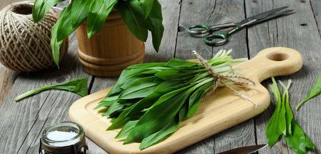 medvedí cesnak, účinky, využitie, pesto, polievka, recept, jar, plodiny