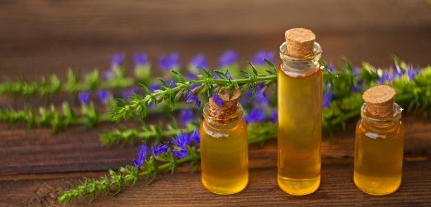 YZOP LEKÁRSKY - má liečivé účinky a využijete ho aj v kuchyni