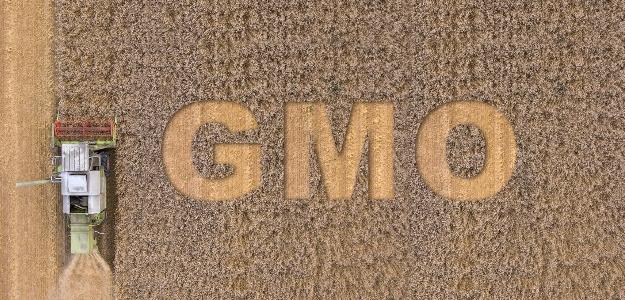 Vplyv GM plodín na zdravie. Čo by ste mali vedieť?