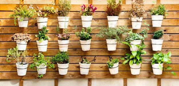 Pestujete si bylinky na balkóne? A viete, ako sa o ne správne starať?