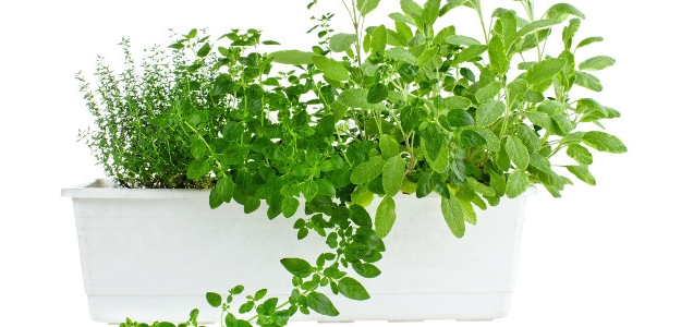 Milujete čerstvé bylinky? Pestujte si ich sami.