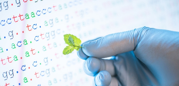 Najčastejšie pestované GM plodiny. Aká je situácia v Európe?