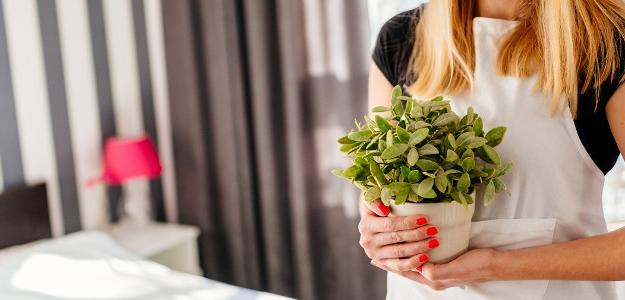 Prečo je dobré mať izbové rastliny doma?