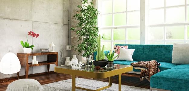 TIP: 6 izbových rastlín, ktoré sú nenáročné na starostlivosť.