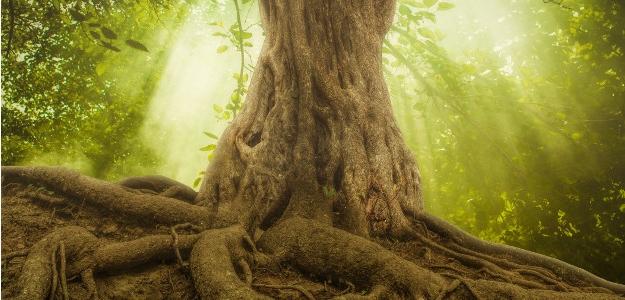 Jemné energie stromov. Čo charakterizuje jednotlivé stromy a ktorý vás osloví?