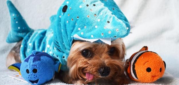 FOTOGALÉRIA: Zachránili šteniatko pred pomalou smrťou. Pozrite sa na jeho nové dobrodružstvá!